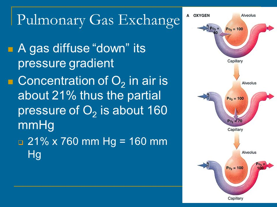Pulmonary Gas Exchange