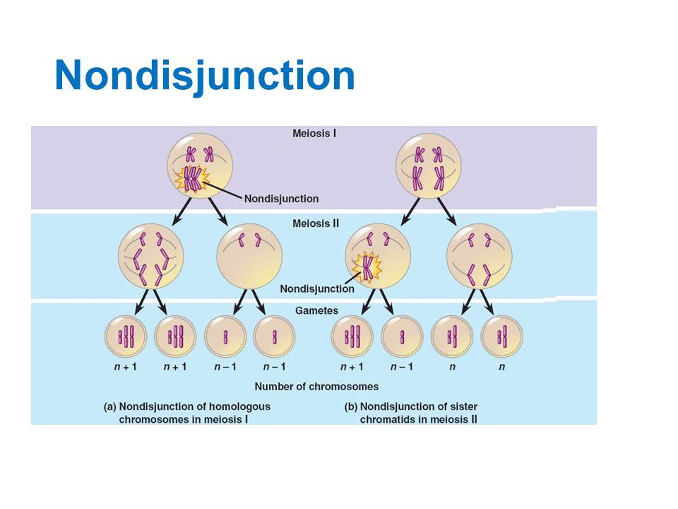 Chromosomal nondisjunction