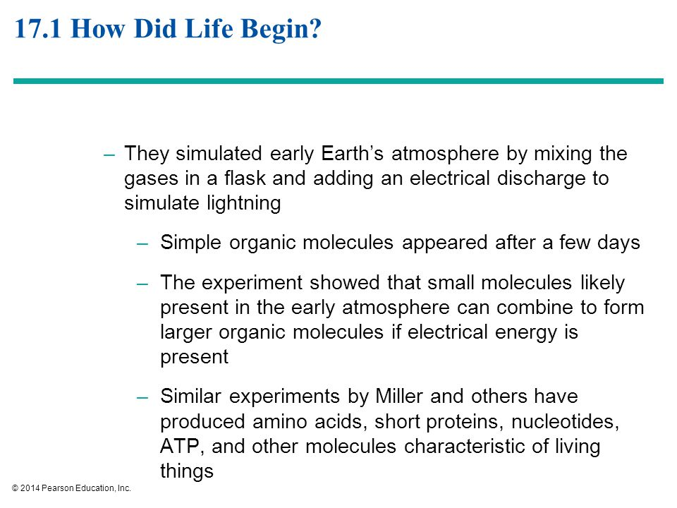 The History of Life ppt video online download