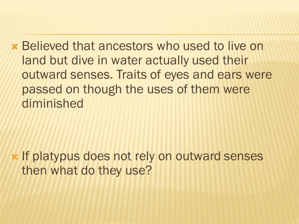 Believed that ancestors who used to live on land but dive in water actually used their outward senses. Traits of eyes and ears were passed on though the uses of them were diminished
