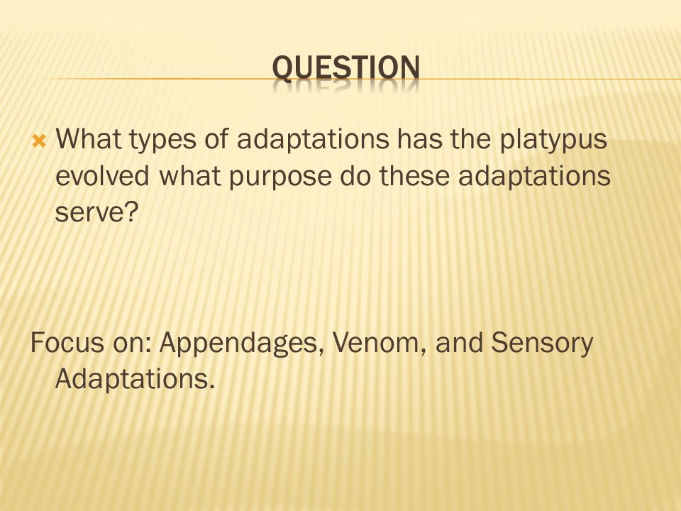 Question What types of adaptations has the platypus evolved what purpose do these adaptations serve