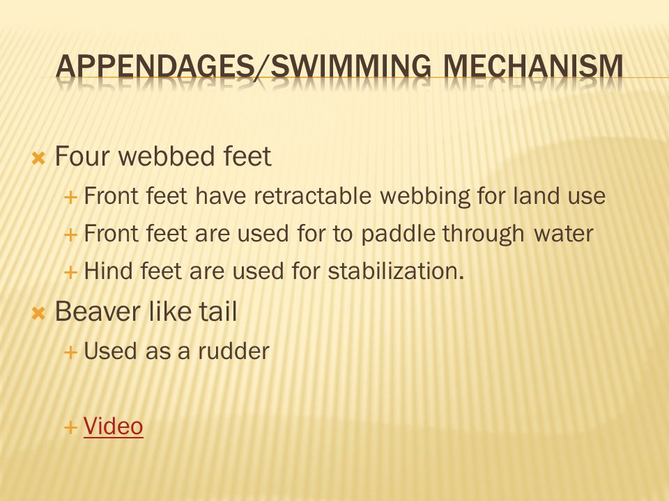 Appendages/Swimming mechanism