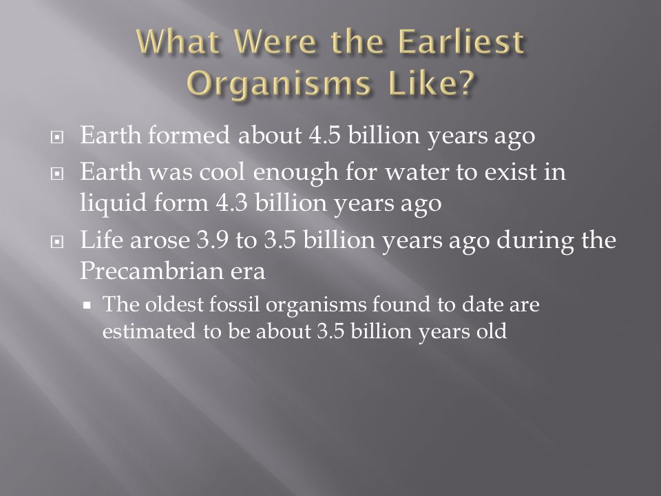 Chapter 17 The History of Life. - ppt download