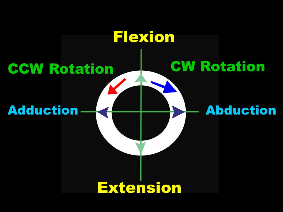 Flexion CW Rotation CCW Rotation Adduction Abduction Extension
