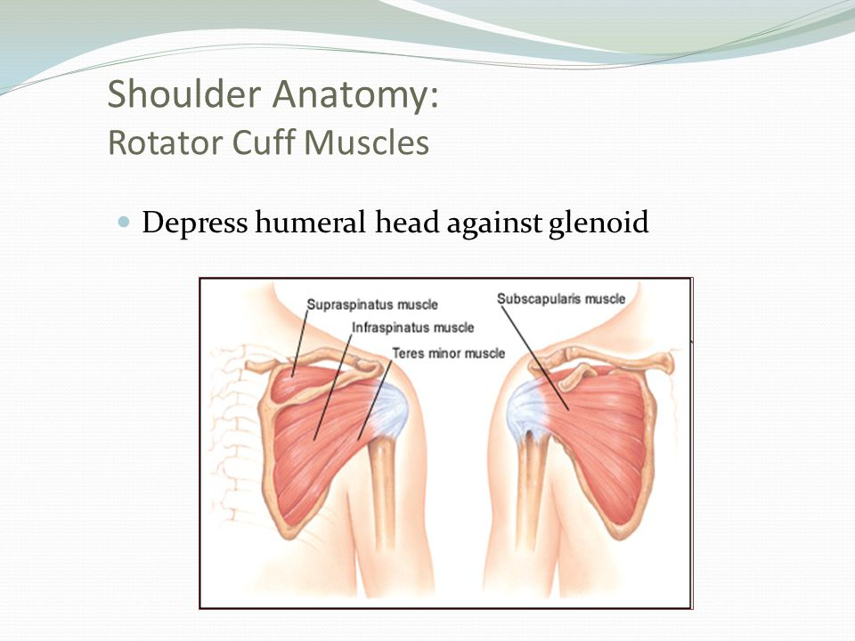 Groß Rotator Cuff Anatomy And Physiology Galerie - Menschliche ...