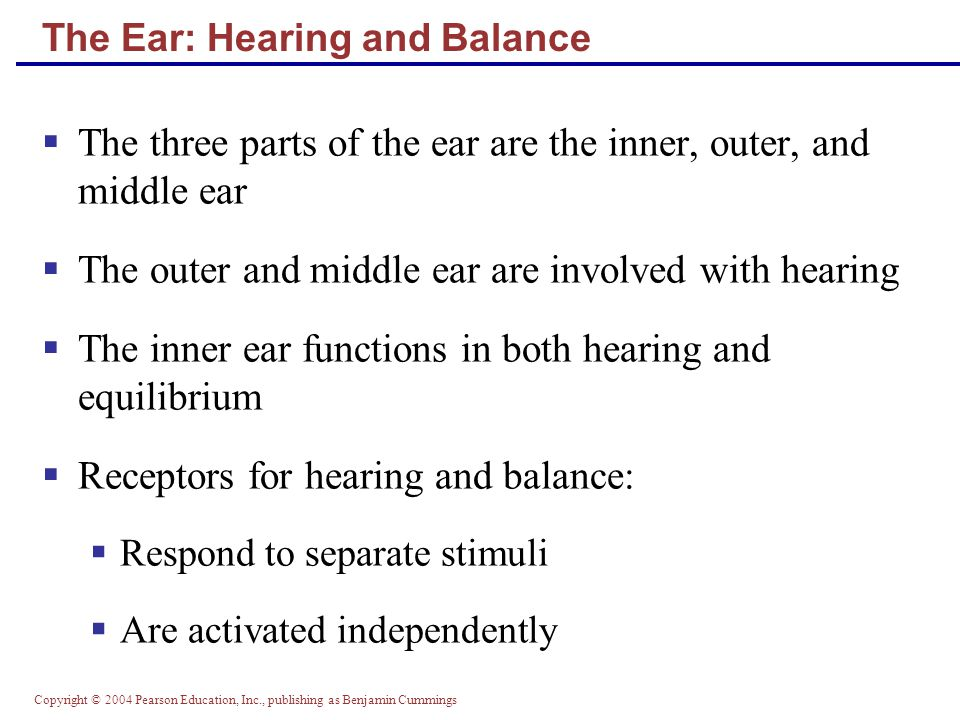 The Special Senses Part A ppt download – The Ear Hearing and Balance Worksheet