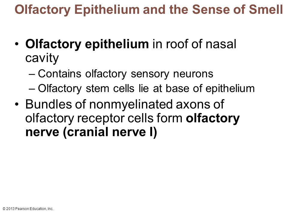 3 Olfactory Epithelium and the Sense ...