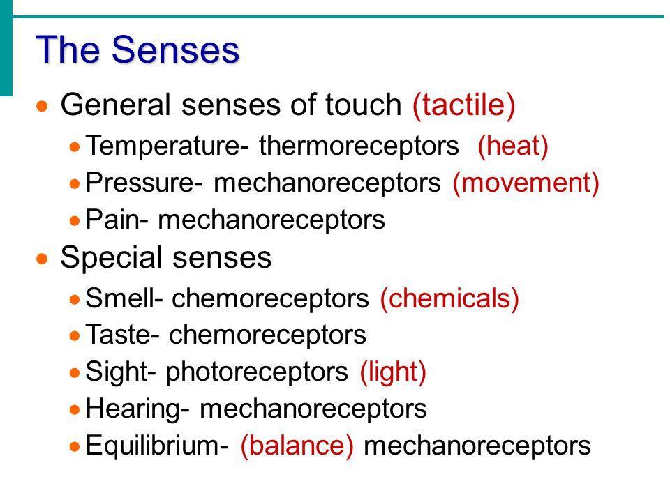 Único Anatomy And Physiology Special Senses Powerpoint Ideas ...