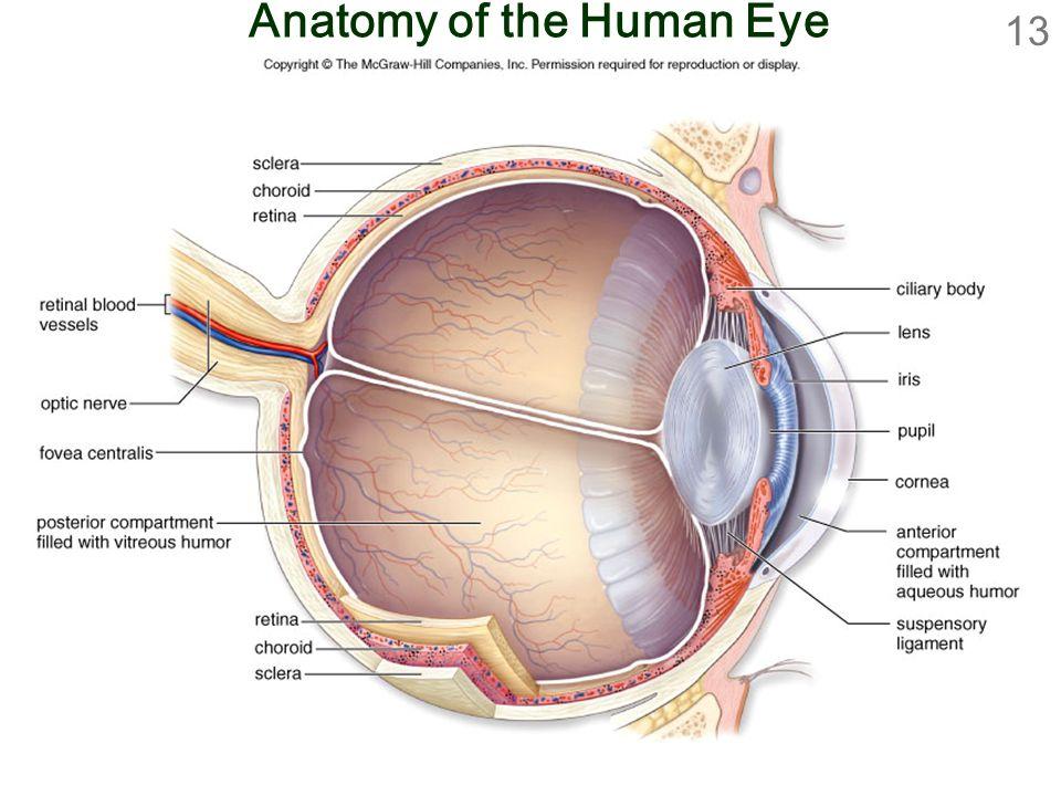 Increíble Anatomy Of Human Eye Ppt Friso - Anatomía de Las ...