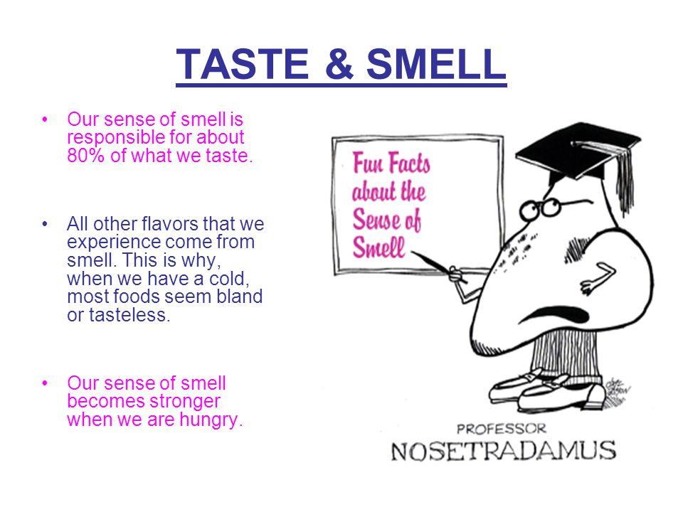 taste what you smell essay Make a list when you are at the beach what do you smell, hear, taste, see and touch  when you write the essay take the reader with you on a walk down the beach.