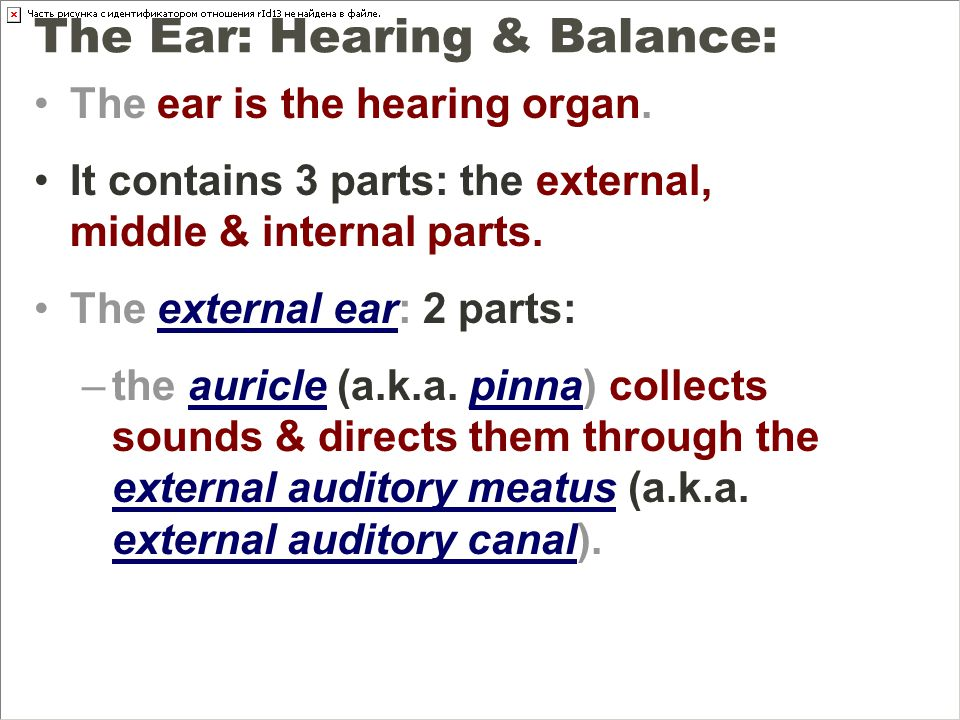 Anatomy Physiology Special Senses ppt video online download – The Ear Hearing and Balance Worksheet