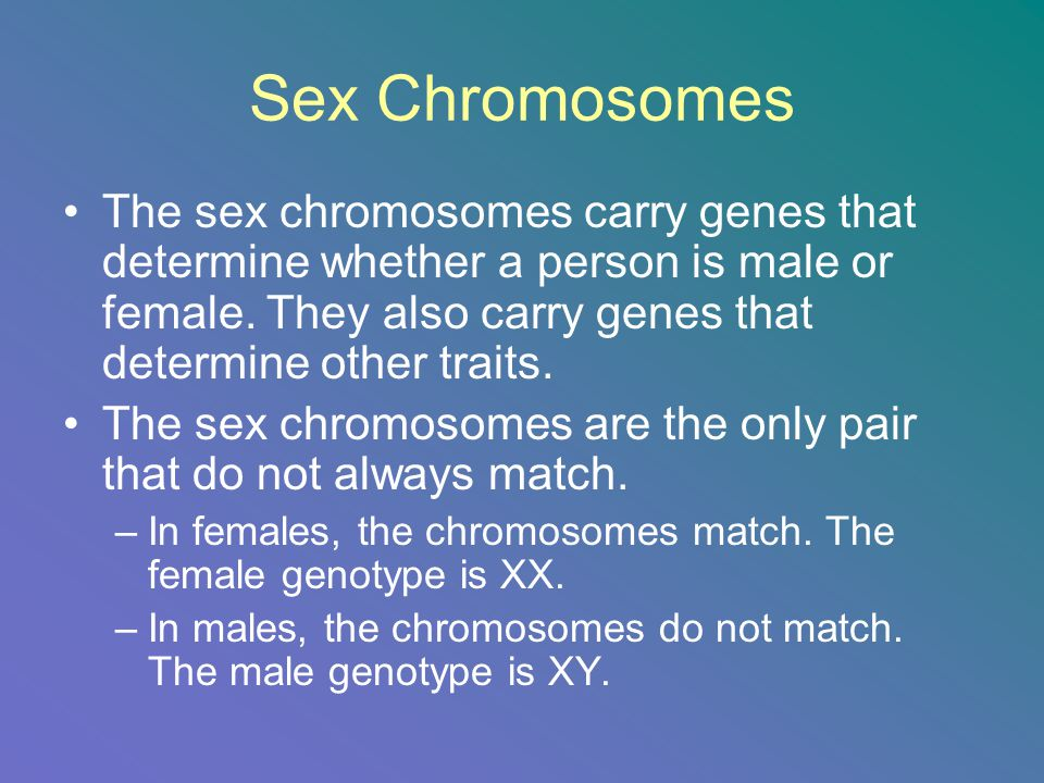 Sex Chromosomes The sex chromosomes carry genes that determine whether a person is male or female. They also carry genes that determine other traits.