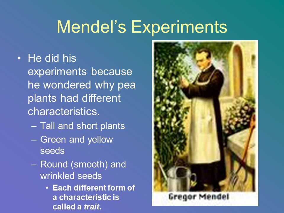 Mendel's Experiments He did his experiments because he wondered why pea plants had different characteristics.