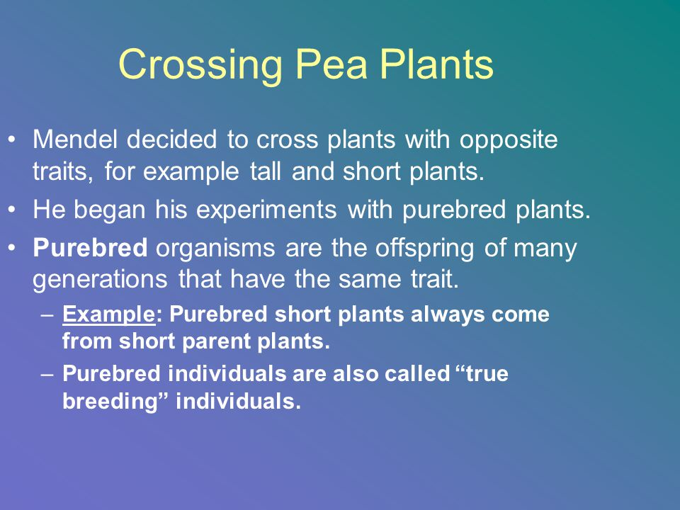 Crossing Pea Plants Mendel decided to cross plants with opposite traits, for example tall and short plants.