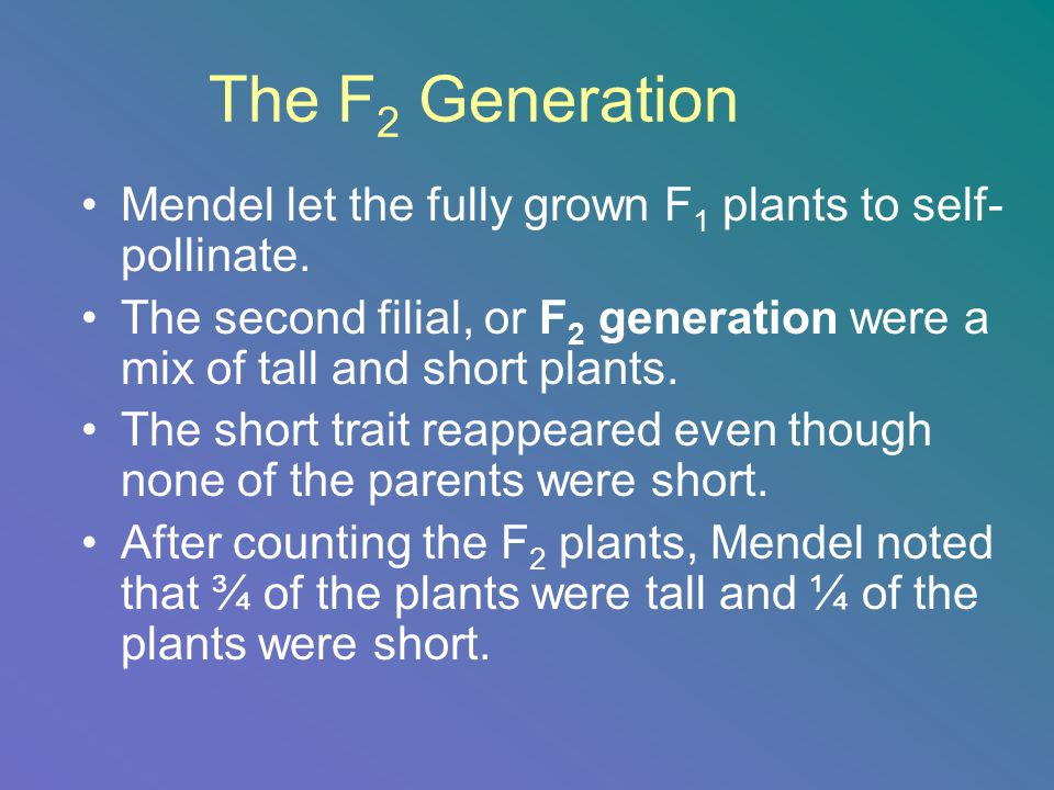 The F2 Generation Mendel let the fully grown F1 plants to self-pollinate. The second filial, or F2 generation were a mix of tall and short plants.