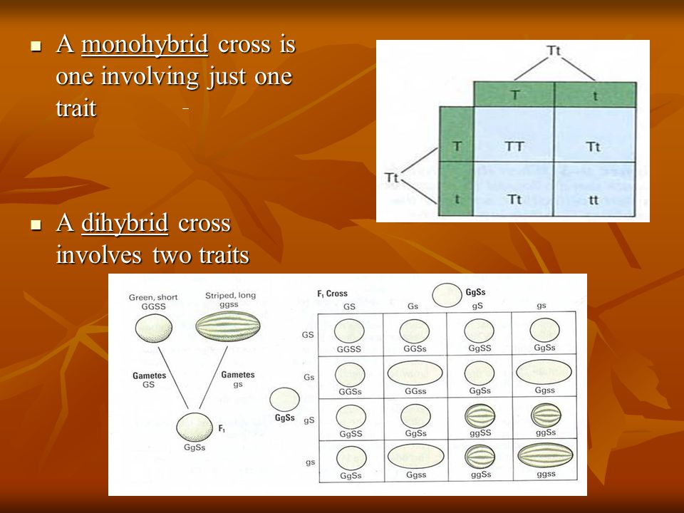 A monohybrid cross is one involving just one trait