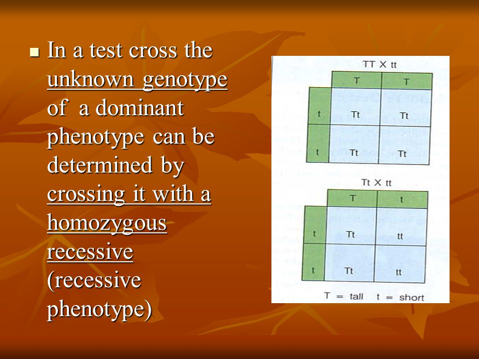 In a test cross the unknown genotype of a dominant phenotype can be determined by crossing it with a homozygous recessive (recessive phenotype)