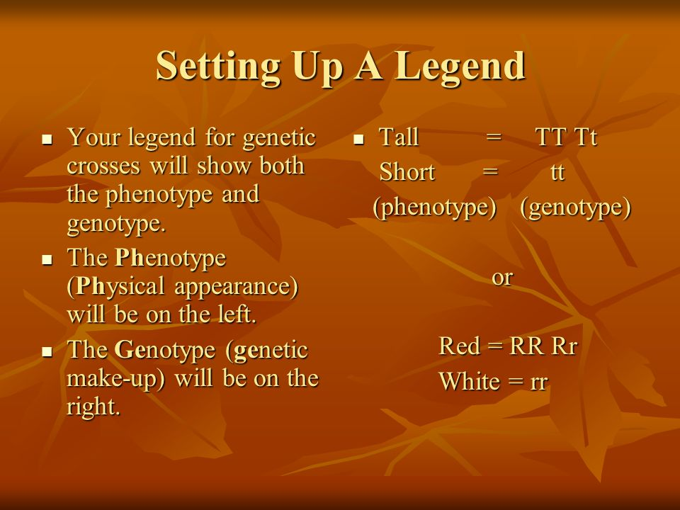 Setting Up A Legend Your legend for genetic crosses will show both the phenotype and genotype.