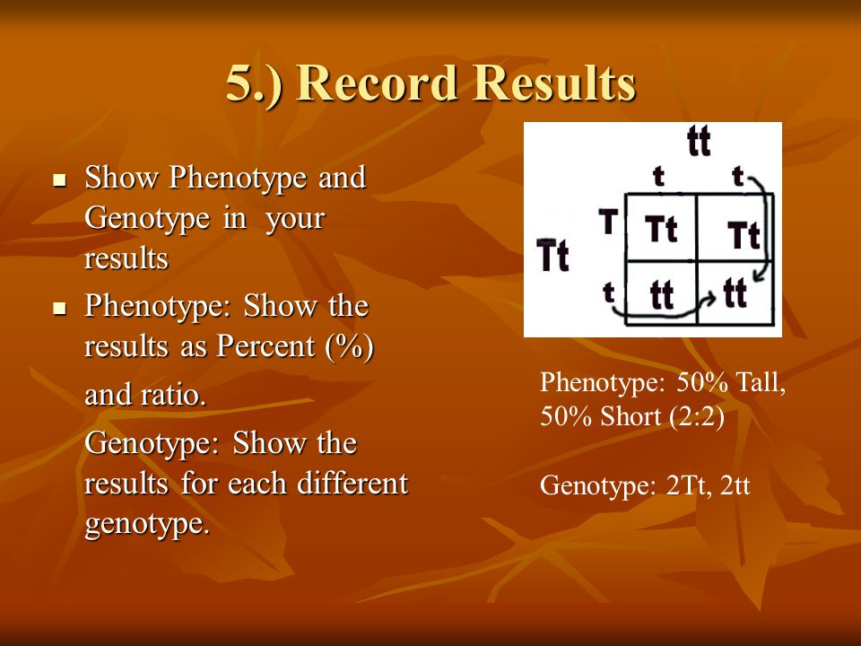 5.) Record Results Show Phenotype and Genotype in your results