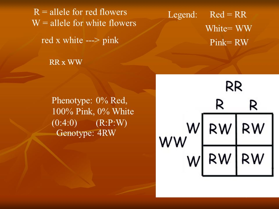 Phenotype: 0% Red, 100% Pink, 0% White (0:4:0) (R:P:W)