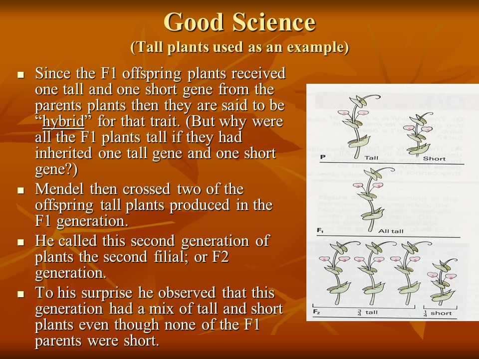 Good Science (Tall plants used as an example)