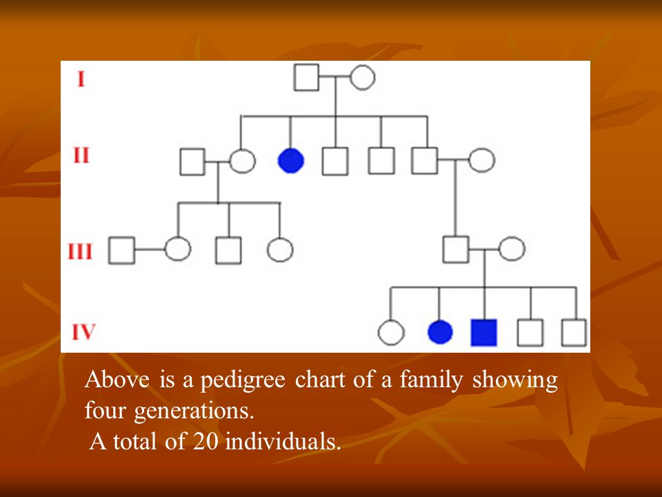 Above is a pedigree chart of a family showing four generations.