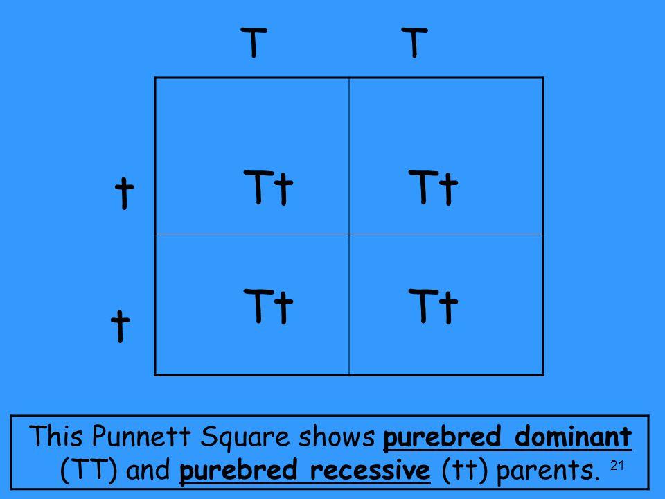 punnett square vocabulary ppt video online download. Black Bedroom Furniture Sets. Home Design Ideas