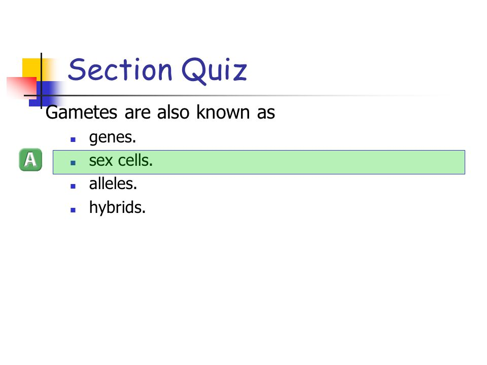 Section Quiz Gametes are also known as genes. sex cells. alleles.