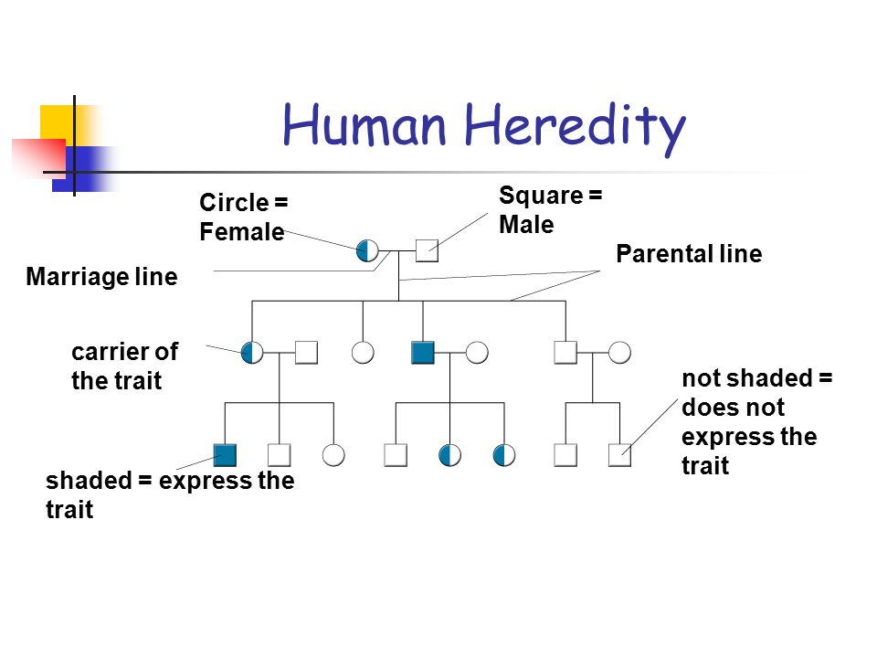 Human Heredity Square = Male Circle = Female Parental line