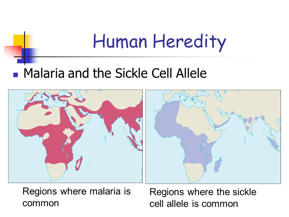 Human Heredity Malaria and the Sickle Cell Allele