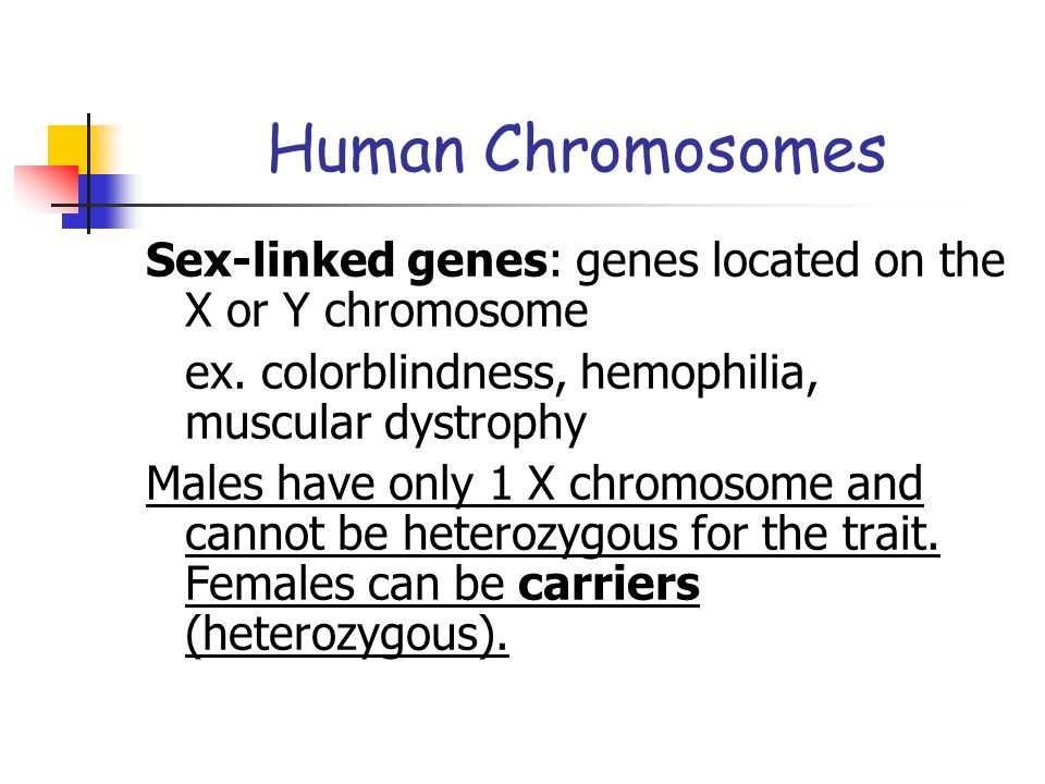 Human Chromosomes Sex-linked genes: genes located on the X or Y chromosome. ex. colorblindness, hemophilia, muscular dystrophy.