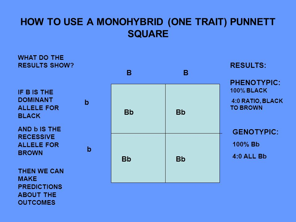 single trait punnett square ppt video online download