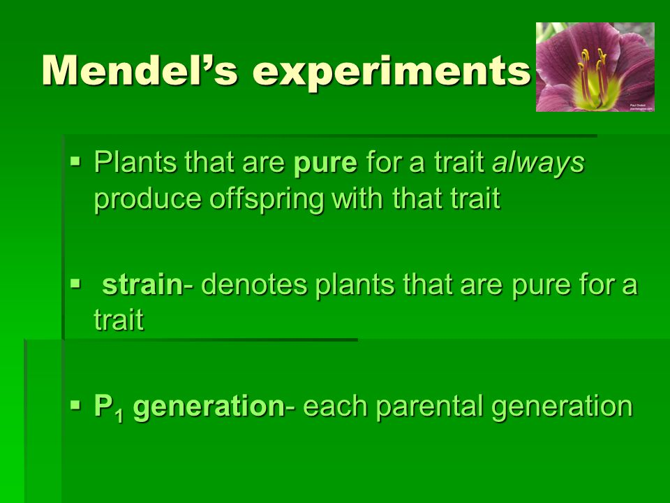 Mendel's experiments Plants that are pure for a trait always produce offspring with that trait. strain- denotes plants that are pure for a trait.