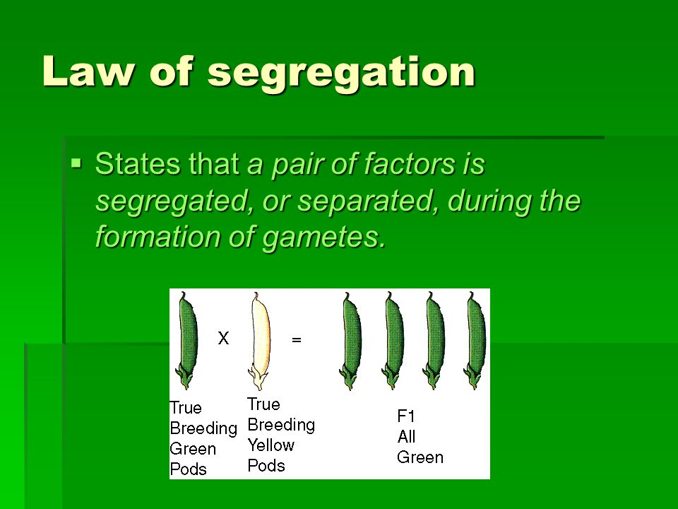 Law of segregation States that a pair of factors is segregated, or separated, during the formation of gametes.