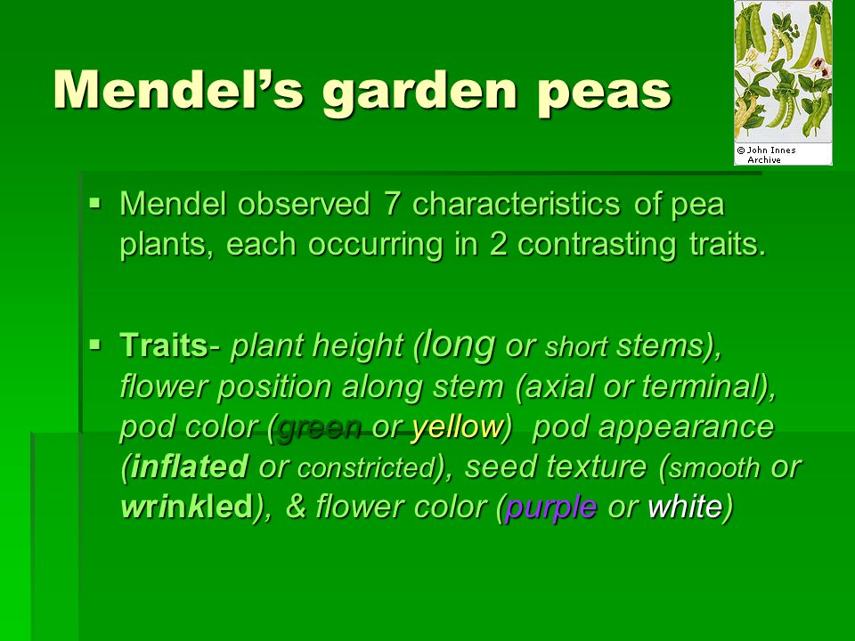 Mendel's garden peas Mendel observed 7 characteristics of pea plants, each occurring in 2 contrasting traits.