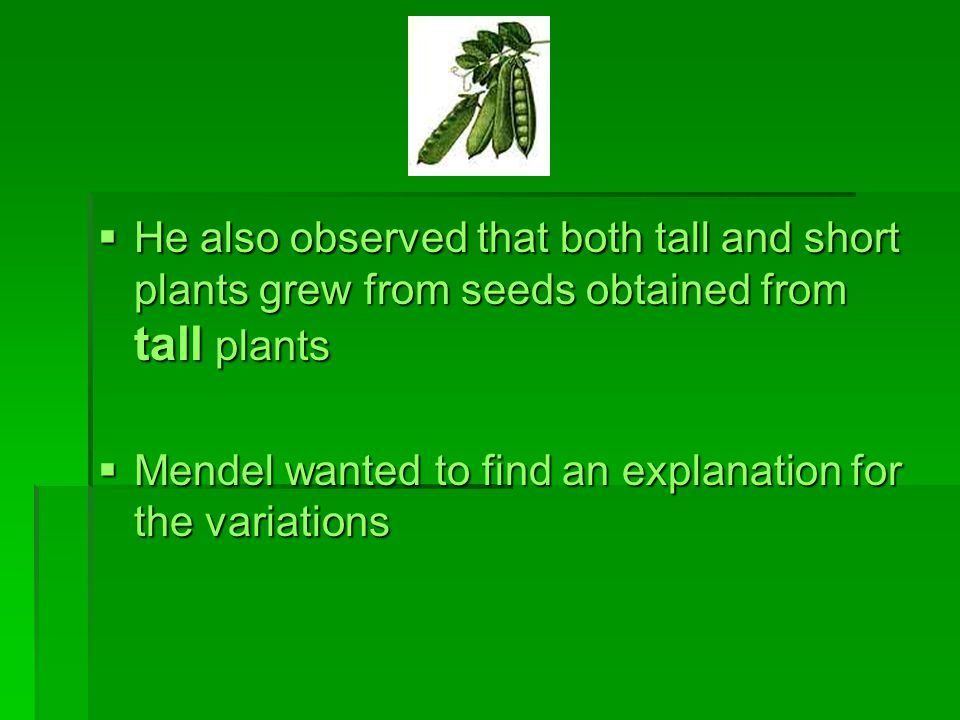 He also observed that both tall and short plants grew from seeds obtained from tall plants
