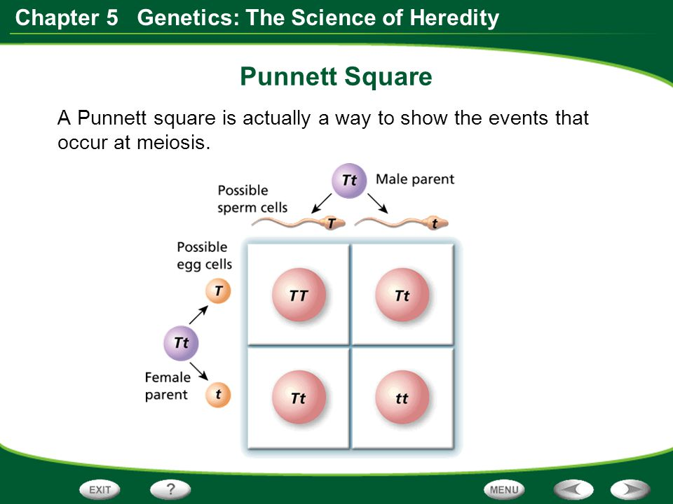 Punnett Square A Punnett square is actually a way to show the events that occur at meiosis.