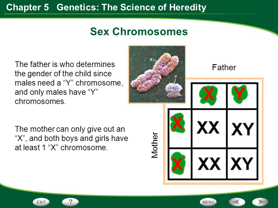 Sex Chromosomes Father Mother