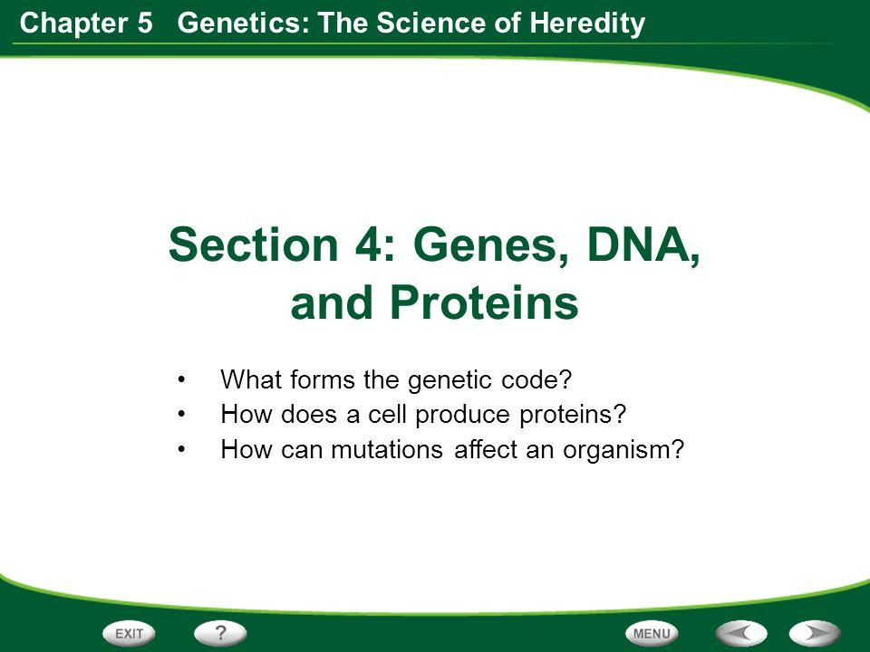 Section 4: Genes, DNA, and Proteins