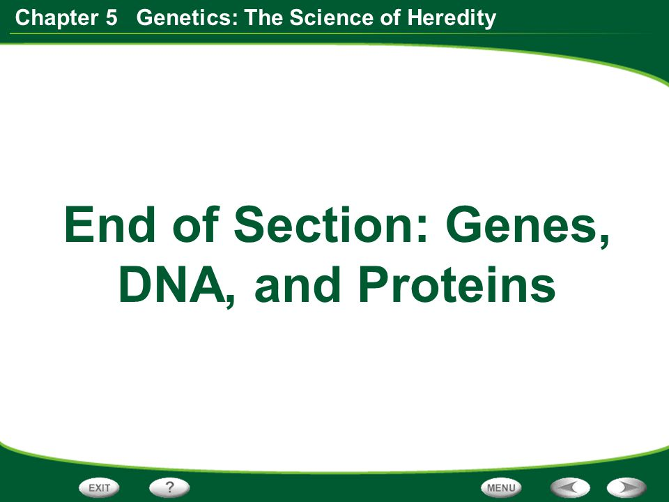 End of Section: Genes, DNA, and Proteins