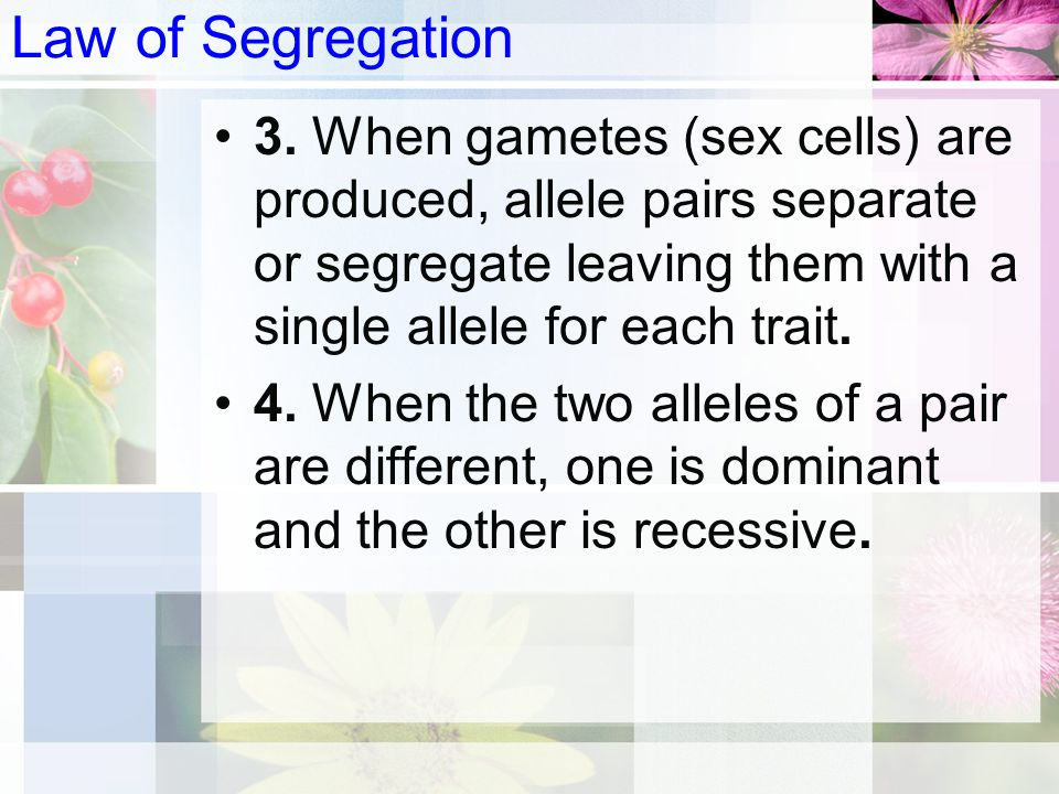 Law of Segregation 3. When gametes (sex cells) are produced, allele pairs separate or segregate leaving them with a single allele for each trait.