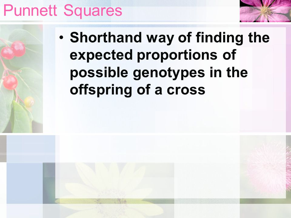 Punnett Squares Shorthand way of finding the expected proportions of possible genotypes in the offspring of a cross.