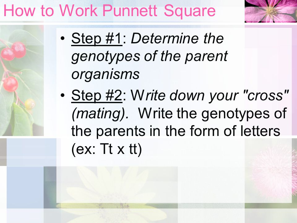How to Work Punnett Square