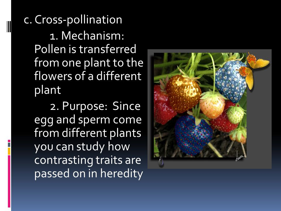 c. Cross-pollination 1. Mechanism: Pollen is transferred from one plant to the flowers of a different plant.