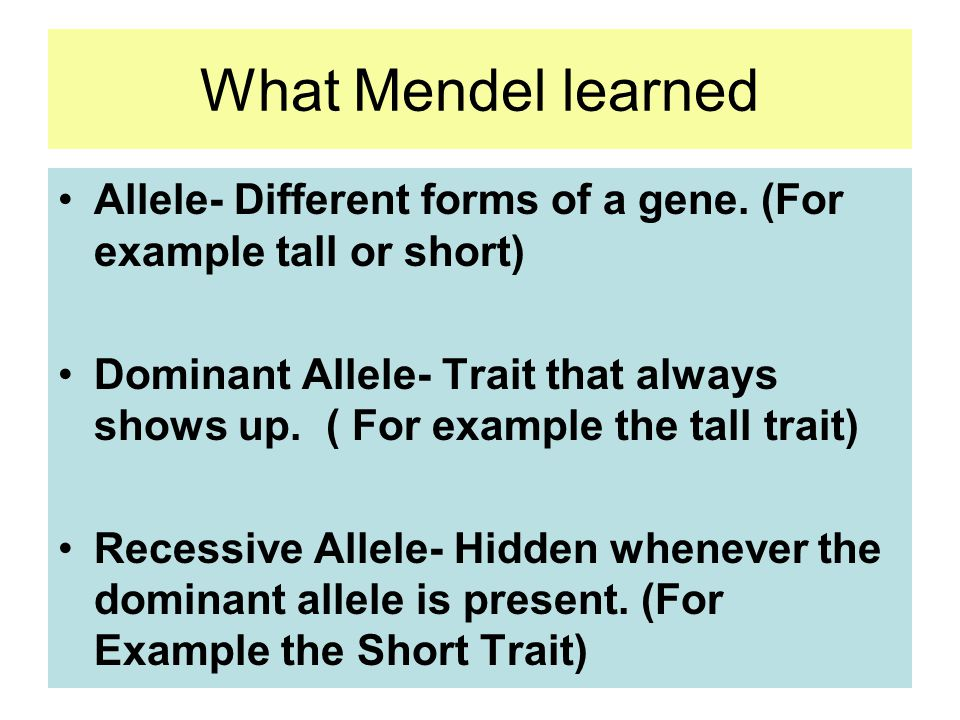 Gene- Section of the DNA responsible for a trait. - ppt download