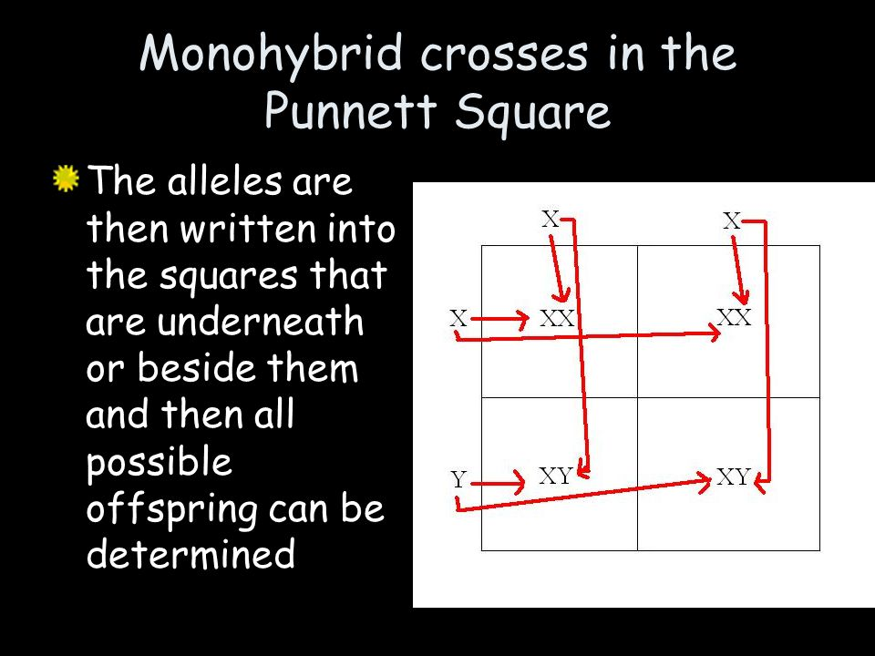 Monohybrid crosses in the Punnett Square