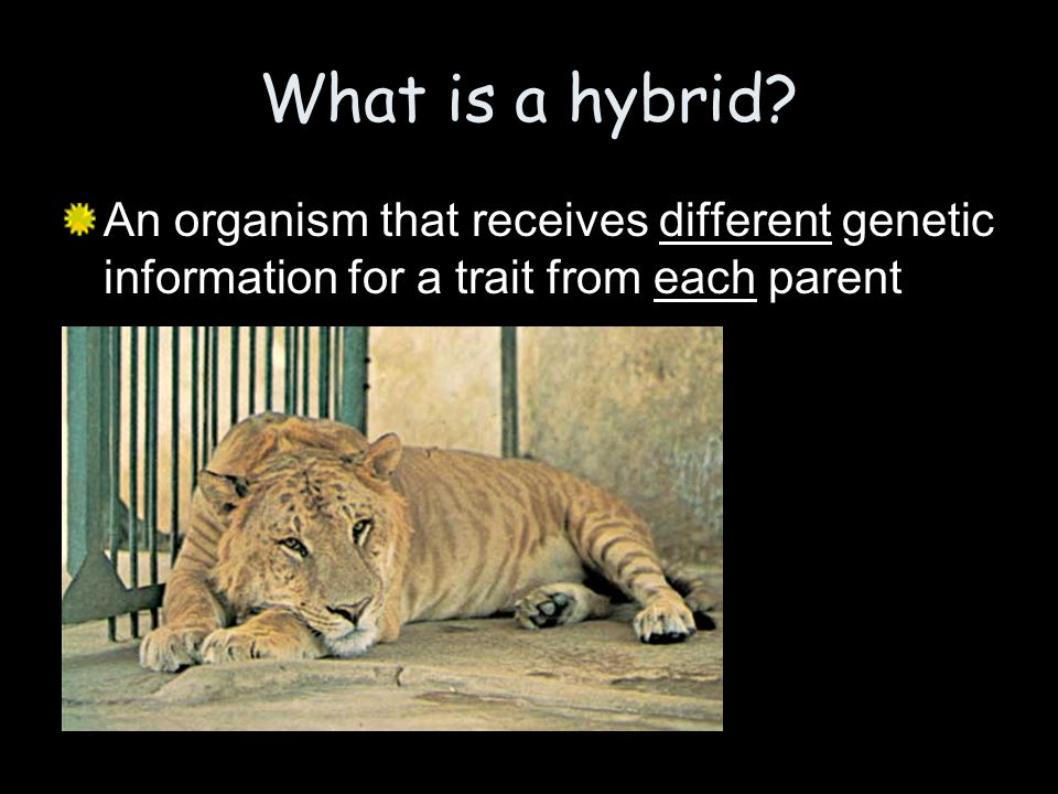 What is a hybrid.