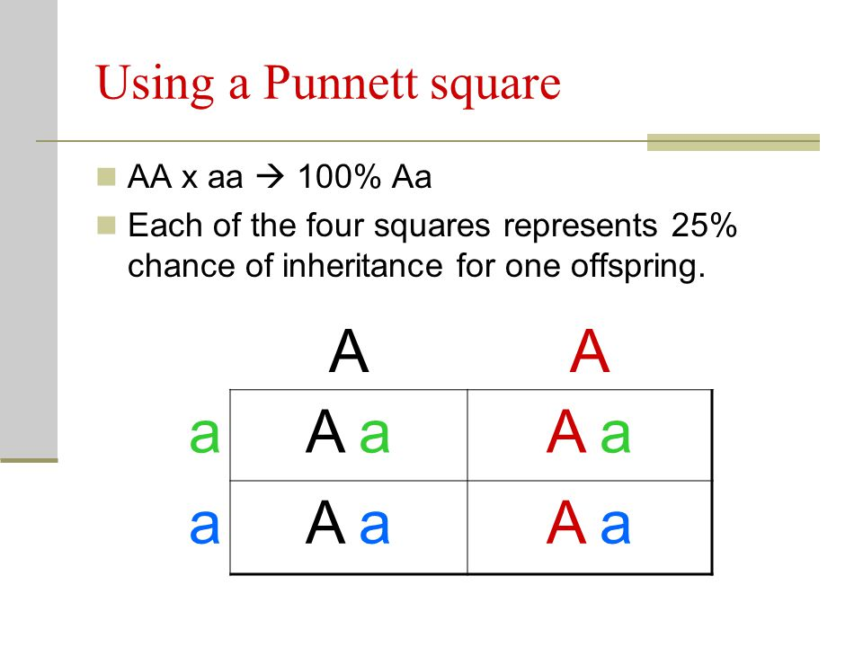 A a A a Using a Punnett square AA x aa  100% Aa
