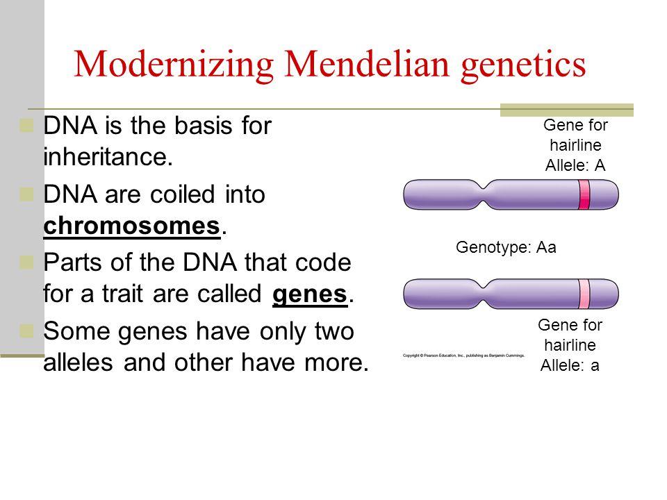 Mendelian inheritance worksheet answers