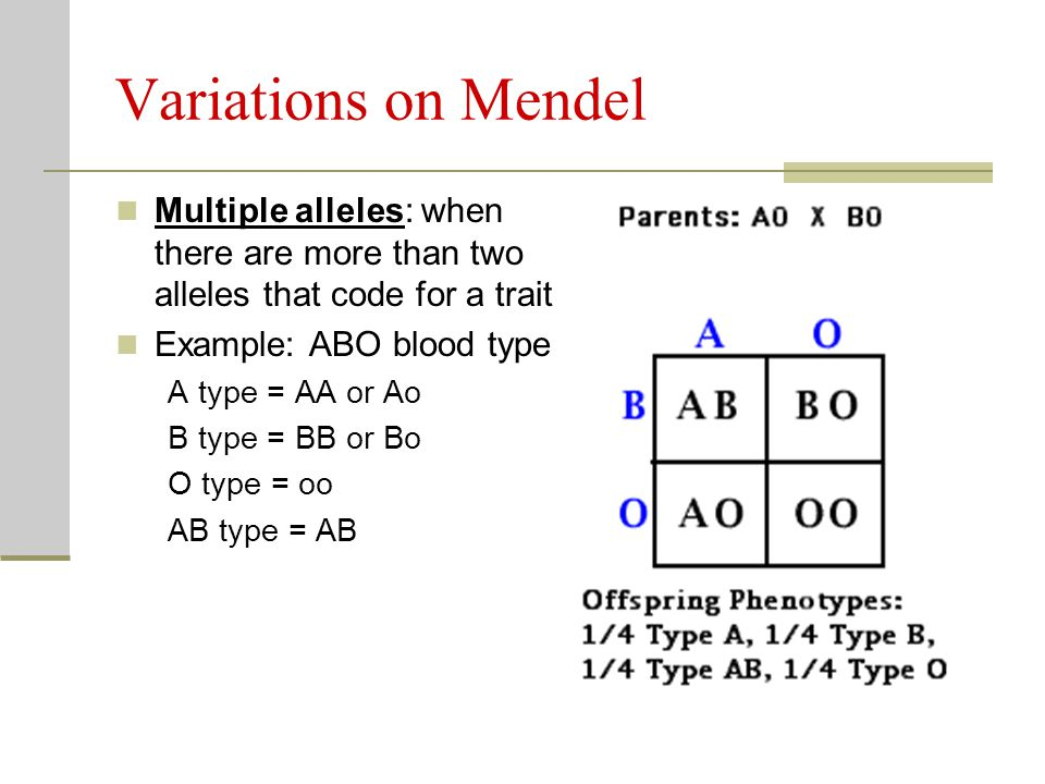 Variations on Mendel Multiple alleles: when there are more than two alleles that code for a trait. Example: ABO blood type.